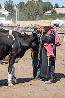 Morocco.  Two Men Discussing the Sale of a Cow.  Had Draa Market, Essaouira Province.
