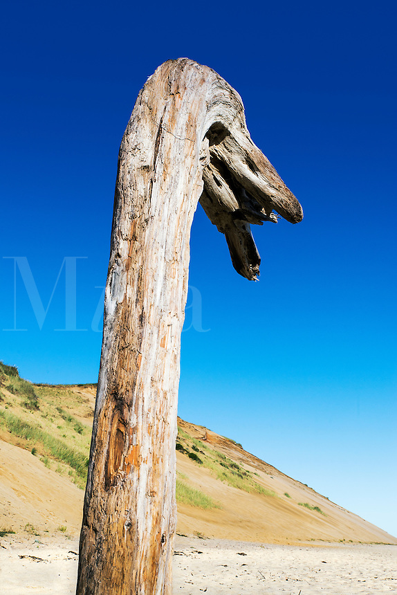 Huge piece of driftwood erected on the beach, Long Nook Beach, Truro, Cape Cod, Massachusetts, USA