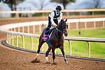 November 1, 2020: Echo Town, trained by trainer Steven M. Asmussen, exercises in preparation for the Breeders' Cup Sprint at at Keeneland Racetrack in Lexington, Kentucky on November 1, 2020. Alex Evers/Eclipse Sportswire/Breeders Cup