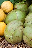 Elephant Apple Dillenia indica Tropical Fruit