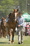 25 Apr 2009: Two time Eclipse Award winner, Good Night Shirt, in the paddock before the second race at the Foxfield Races in Charlottesville, Virginia. Good Night Shirt is owned by Harold A. Via, Jr and trained by Jack Fisher. Good Night Shirt has career earnings of $979,493.