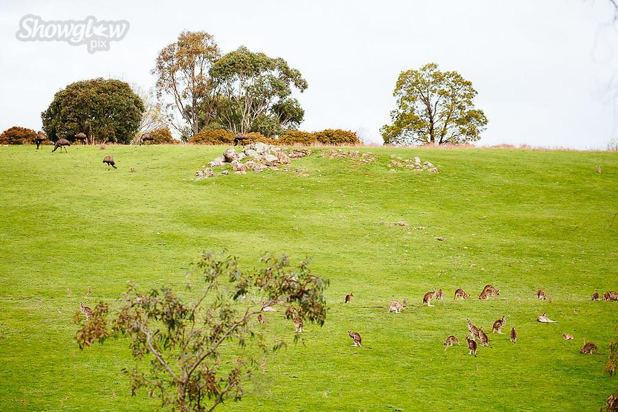 Image Ref: CA841<br /> Location: Dunkeld<br /> Date of Shot: 07.08.19