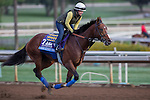 OCT 26 2014:One Lucky Dane, trained by Bob Baffert, exercises in preparation for Sentient Jet Breeders' Cup Juvenile at Santa Anita Race Course in Arcadia, California on October 26, 2014. Kazushi Ishida/ESW/CSM