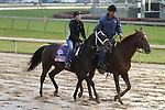 Grace Hall trained by Anthony Dutrow and to be ridden by Ramon Dominguez exercises at Churchill Downs on November 4, 2011.