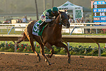 """DEL MAR, CA  AUGUST 18: #5 Accelerate, ridden by Joel Rosario, in the stretch of the $1 Million TVG Pacific Classic (Grade l) """"Win and You're in Classic Division"""" on August 18, 2018 at Del Mar Thoroughbred Club in Del Mar, CA.(Photo by Casey Phillips/Eclipse Sportswire/Getty ImagesGetty Images"""