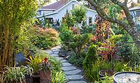 Stepping stone path leading through backyard secret garden, California plant collector garden - Carol Brant