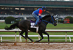 October 28, 2015: Valid, trained by Marcus Vitali and owned by Crossed Sabres Farm, is entered to run in the Breeder's Cup Las Vegas Dirt Mile $1,000,000.    Candice Chavez/ESW/CSM