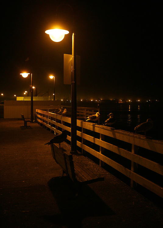 December 5, 2007; Santa Cruz, CA, USA; Seagulls after dark at the Santa Cruz Municipal Wharf in Santa Cruz, CA. Photo by: Phillip Carter