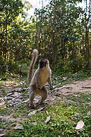 Lemur Island