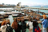 California Sealions (Zalophus californianus), Pier 39, San Francisco, California