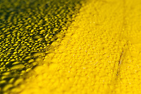 Water beading up on a yellow plastic surface.