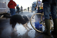 post-race dog/wheel wash<br /> <br /> U23 race<br /> Koppenbergcross 2015