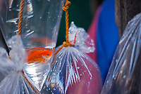 Street Photography, Manila, Philippines Pet Fish for sale in a plastic bag,
