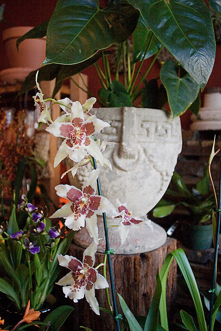 Paxton Gate, Valencia Street, Plants, Flower, San Francisco, California
