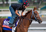 October 26, 2014:  Parranda, trained by Jerry Hollendorfer, exercises in preparation for the Breeders' Cup Filly & Mare Turf or Distaff at Santa Anita Race Course in Arcadia, California on October 26, 2014. Scott Serio/ESW/CSM