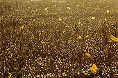 """Seoul, South KoreaDecember 13 1987<br /> <br /> Massive crowds for Kim Dea-jong, the opposition leader to the ruling party campaigning during the South Korean presidential elections in Seoul's Poramae Park. <br /> <br /> Kim Dae-jung (3 December 1925 to 18 August 2009) was President of South Korea from 1998 to 2003, and the 2000 Nobel Peace Prize recipient. As of this date Kim is the first and only Nobel laureate to hail from Korea. A Roman Catholic since 1957, he has been called the """"Nelson Mandela of Asia"""" for his long-standing opposition to authoritarian rule...."""