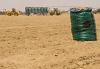 EGYPT, Farafra, potato farming in desert, harvest at United Farms, the large fields are irrigated by Pivot circle irrigation systems, the fossile groundwater from the Nubian Sandstone Aquifer is pumped from 1000 metres deep wells  / AEGYPTEN, Farafra, United Farms, Kartoffelanbau in der Wueste, Verladung nach der Ernte auf LKW, die kreisrunden Felder werden mit Pivot Kreisbewaesserungsanlagen mit fossilem Grundwasser des Nubischer Sandstein-Aquifer aus 1000 Meter tiefen Brunnen bewaessert