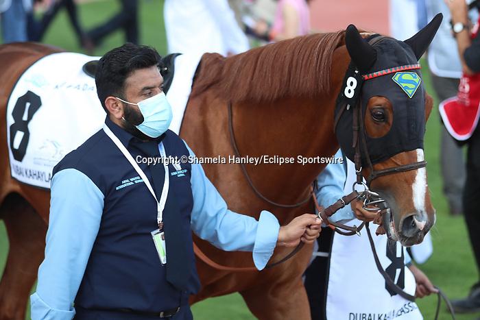 March 27 2021: HAYYAN (FR) #8, in the post parade for the Dubai Kahayla Classic at Meydan Racecourse, Dubai, UAE. Shamela Hanley/Eclipse Sportswire/CSM