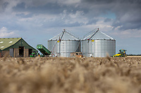 Large grain bins being filled with wheat - Lincolnshire; August