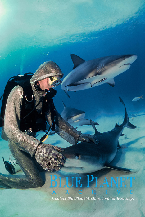 diver and Caribbean reef shark, Carcharhinus perezii, Bahamas, Caribbean Sea, Atlantic Ocean