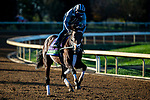 November 3, 2020: Factor This, trained by trainer Brad Cox, exercises in preparation for the Breeders' Cup Mile at Keeneland Racetrack in Lexington, Kentucky on November 3, 2020. Jon Durr/Eclipse Sportswire/Breeders Cup
