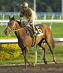 30 January 2010: and jockey after the Sunshine Millions Distaff Stakes at Gulfstream Park in Hallandale Beach, FL.