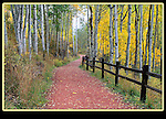 Diffuse light from overcast skies is best for photographing within a forest.<br />