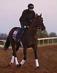 Gretzky The Great, trained by trainer Mark E. Casse, exercises in preparation for the Breeders' Cup Juvenile Turf at Keeneland Racetrack in Lexington, Kentucky on November 3, 2020.