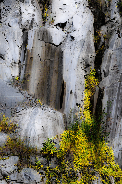 """""""GRANITE & WILDFLOWERS""""<br /> <br /> Yellow yarrow contrast against sheer granite walls which have been colored by time. These walls were blasted into existence in order to build a reservoir, Lake Koocanusa, in Montana. Nature has her way of turning messes humans make in to things of beauty."""