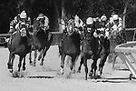 January 31, 2015: Delta Golf Alpha has it wrapped up on the turn _ Race 8  scene at Tampa Bay Downs. Sue Kawczynski/ESW/CSM