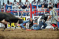 USA. Angola. 12th October 2008..Convict Poker. A bull makes short work of the prisoners poker game and turns for a second charge..©Andrew Testa/Panos