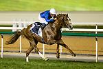 DUBAI,UNITED ARAB EMIRATES-MARCH 31: Hawkbill,ridden by William Buick,wins the Dubai Sheema Classic at Meydan Racecourse on March 31,2018 in Dubai,United Arab Emirates (Photo by Kaz Ishida/Eclipse Sportswire/Getty Images)