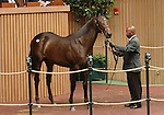 September 08, 2014:Hip #105 Bernardini - Mushka filly consigned by Eaton Sales, sold for $1,200,000 to John Ferguson at the Keeneland September Yearling Sale.  Candice Chavez/ESW/CSM