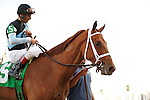 Capo Bastone with John VElazquez up wins allowance race at Gulfstream Park. Hallandale Beach Florida. 02-16-2013