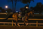 Digital Age, trained by trainer Chad C. Brown, exercises in preparation for the Breeders' Cup Mile at Keeneland Racetrack in Lexington, Kentucky on November 4, 2020.