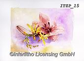 Franco, FLOWERS, BLUMEN, FLORES, paintings+++++,ITZP15,#f#, EVERYDAY