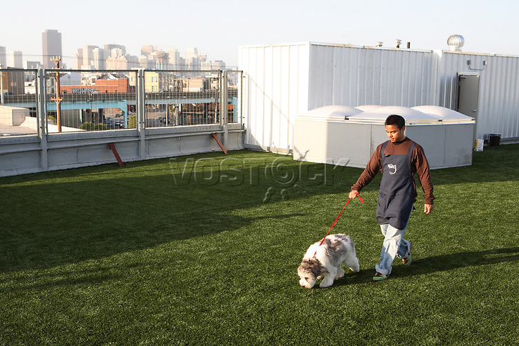 A staff member of the Wag Hotel in San Francisco, CA, takes one of the guests, a Bearded Collie, for a stroll on the rooftop on Sunday, May 13, 2007. The Wag hotel, a luxury resort for dogs, opened in San Francisco on Saturday, May 12, 2007. It offers over 230 rooms and suites specifically designed for its four-legged guests as well as spa services such as pedicures, facials, massage and grooming. <br /> <br /> <br /> <br /> <br /> <br /> (Bildtechnik: sRGB, <br /> <br /> 28.28 MByte vorhanden)