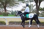 RIYADH, SA February 19 2021: CHUWA WIZARD (JPN) Track work from King Abddulaziz Racetrack, Riyadh, Saudi Arabia. Shamela Hanley/Eclipse Sportswire/CSM