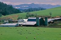 Sheep farm near Crabtree<br /> Appalachian Mountains<br /> Haywood County, North Carolina