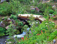 Bridge and wildflowers. Bird Creek Meadows, Washington.