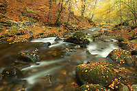The Birks of Aberfeldy and the Moness Burn in autumn, Aberfeldy, Perthshire
