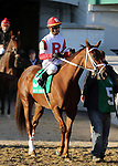 LOUISVILLE, KY -NOV 23: Shining Copper (Cory Lanerie) in the post parade before winning the G3 River City Handicap at Churchill Downs, Louisville, Kentucky. Owner Kenneth L. and Sarah K. Ramsey, trainer Michael Maker. By Aragorn x La Minuta, by Winged Victory. (Photo by Mary M. Meek/Eclipse Sportswire/Getty Images)