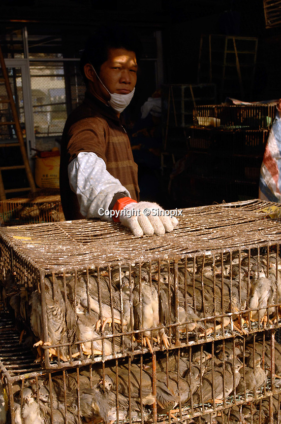 "Cages of quails at a bird and poultry marker in Guangzhou, China in this file photo. China's wild animal markets, where live wild animals and reared animals are sold are the source of many viruses that mutate as they ""jump"" from animals to humans. The coronavirus COVID-19 is thought to have originated in an animal market in China. <br /> By Sinopix Photo Agency"