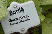 Schild, Pflanzenschild, Beschriftung, Borretsch, Gurkenkraut, Kukumerkraut, Boretsch, Borago officinalis, Borage, starflower, Bourrache
