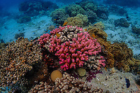 Coral outcrop on the Great Barrier Reef