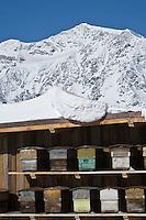 Europe/France/73/Savoie/Val d'Isère: Restaurant d'Altitude: La Folie douce  au sommet du telecabine de la Daille 2290m - Détail des ruches en hommage au miel de savoie d'alpage