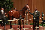 13 September 2011.Hip #221 Candy Ride - Rayelle filly sold for $210,000.