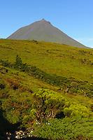 Bergland mit Baumheide (Erica azorica), Pico Alto, auf der Insel Pico, Azoren, Portugal