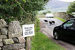 """Lake District Cumbria near Buttermere<br /> <br /> Amusing sign writhed in local dialect <br /> """"Tek Care, Lambs Ont Road.""""<br /> <br /> Lambs stray onto the road near the sign causing two cars to brake to avoid them.<br /> <br /> <br /> <br /> Pic by Gavin Rodgers/Pixel 8000 Ltd"""