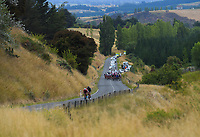 The peloton approaches the top of Millars Road KOM on the first circuit during stage two of the NZ Cycle Classic UCI Oceania Tour (Gladstone circuit) in Wairarapa, New Zealand on Thursday, 16 January 2020. Photo: Dave Lintott / lintottphoto.co.nz